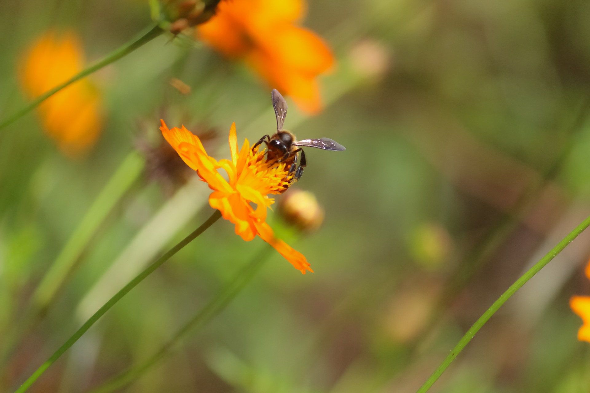 nature-bee pollination
